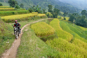 On the rice track
