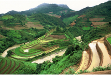 Mu Cang Chai terraces