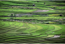 Incredible rice terracing