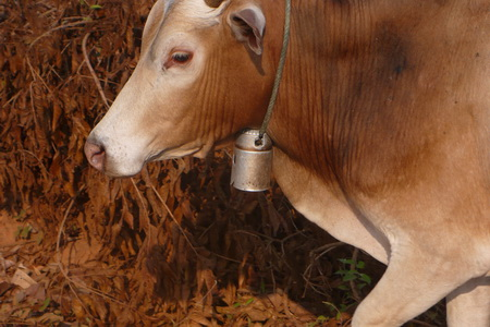 Ho Chi Minh Trail bomb fuses cow bell